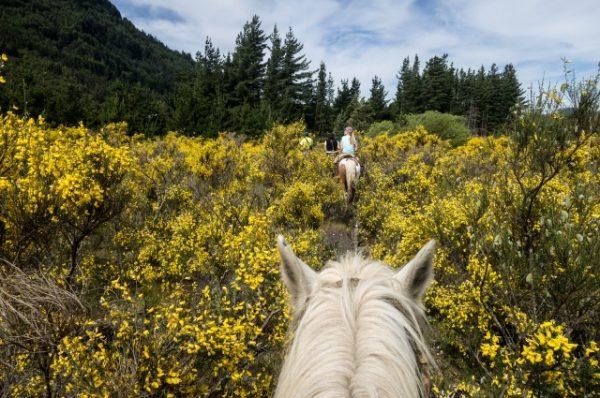 randonnée cheval